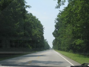 Driving through the Frances Marion National Forest