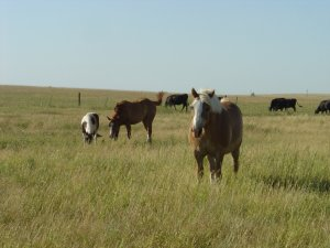 Beautiful views and beautiful horses