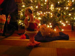 Fuzzy, intrigued by the Santa flamingo
