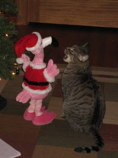 Lucas, conversing with Santa flamingo