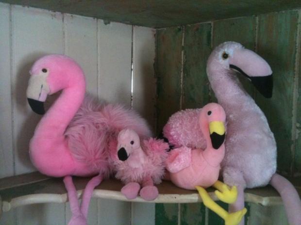 flamingofour.jpg