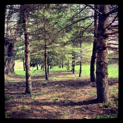 Trees, trees, trees.