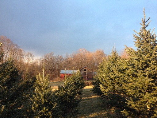 Type Three: Christmas Tree Farm. Subtype A: No frills. This farm offers cut-your-own trees, but no other festive activities.