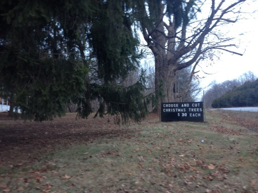 Type Three: Christmas Tree Farm. Subtype A: No frills. This tree farm advertises from the road. Turn down the driveway, drive behind the farmhouse and the trees are near.