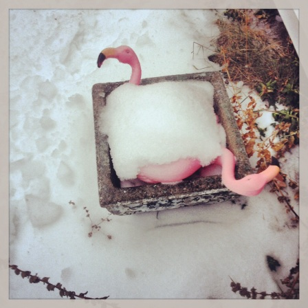 Even the flamingos were iced over!