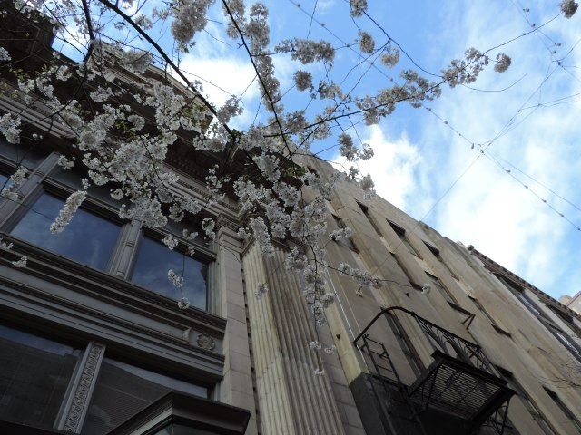 Westminster Street, looking up. Rhode Island is ahead of Vermont in the flower count.