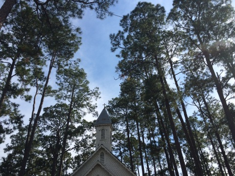 The steeple among the pines.